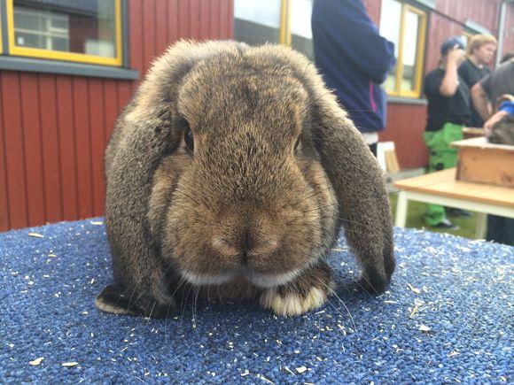 Kanindag på Skjetlein